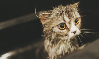 猫 夢 心理状態