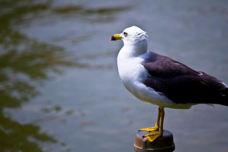鳥 夢心理