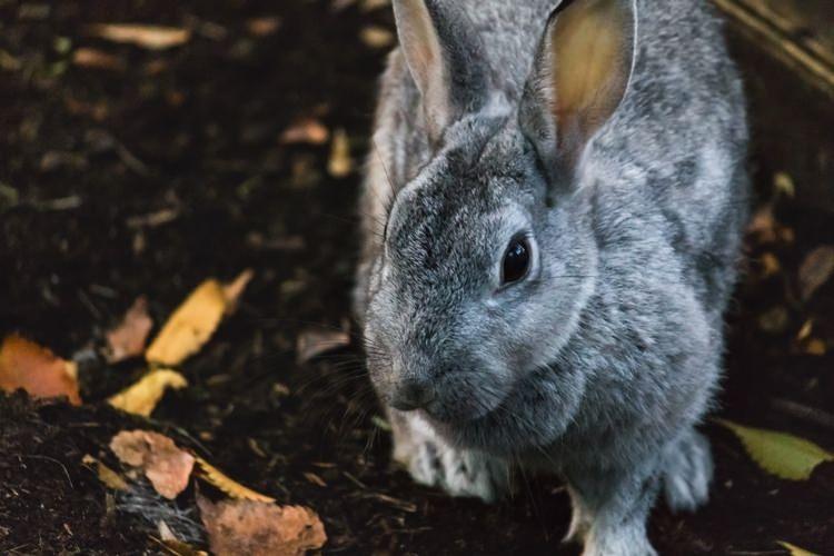 ウサギ 夢心理